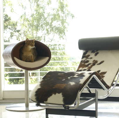 Luxury design for pets